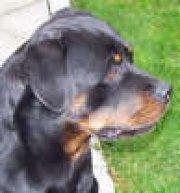 Profilbild von blackdog