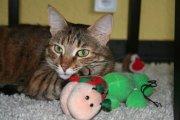 Profilbild von Feline314