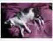 Profilbild von ranguna