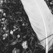 Profilbild von cloverleaf