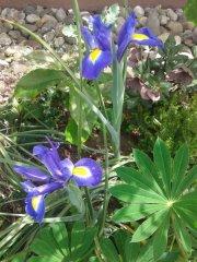 Profilbild von lillifee70