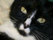 Profilbild von albacat