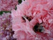Profilbild von Bienle
