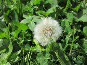 Profilbild von Pusteblume79