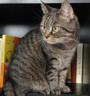 Profilbild von Kitty-Katze