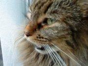Profilbild von lala99