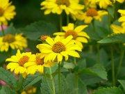 Profilbild von butterblume79