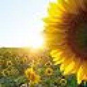 Profilbild von sonnenblume252