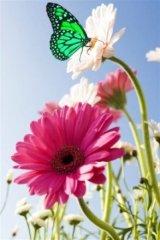 Profilbild von greenbutterfly