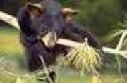 Profilbild von kleineBärin