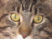 Profilbild von Calaquendi