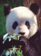 Profilbild von ssghb