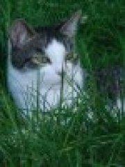 Profilbild von pepponeh