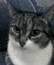Profilbild von Lockenkopf