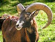 Profilbild von aries
