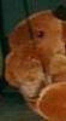 Profilbild von Elchi130