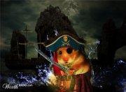 Profilbild von hamster