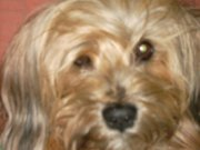 Profilbild von Lesemausmama