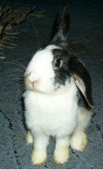 Profilbild von alexboon