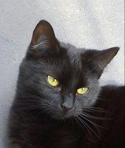 Profilbild von watthexe