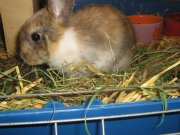 Profilbild von kaninchen