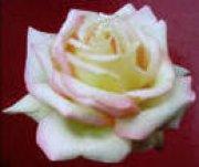 Profilbild von Mrs.Darcy