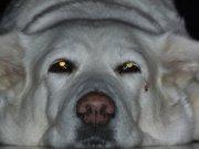 Profilbild von Crazygirl