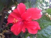 Profilbild von hibiscus