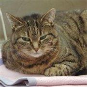 Profilbild von Kitty111