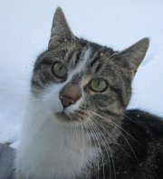 Profilbild von Hexx-Katze