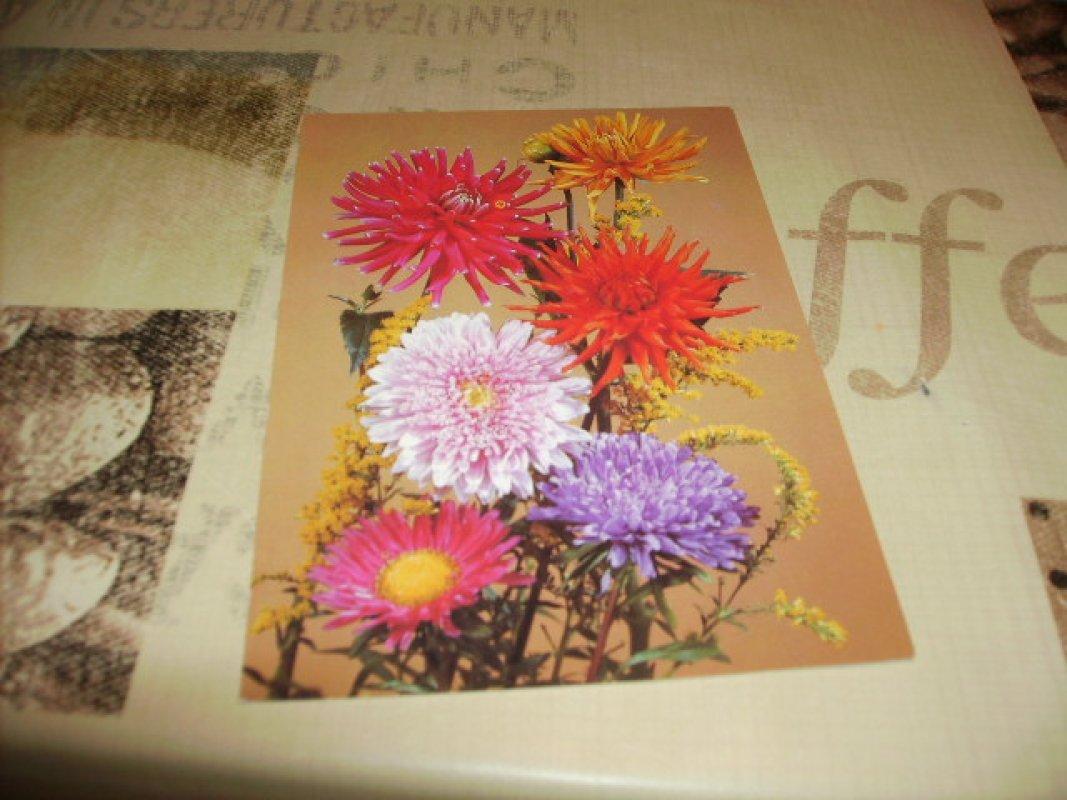 Blumenkarte (489) - hier für 1 Token insgesamt 20 Karten